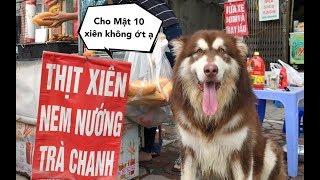 Download Chó Mật đi mua thịt xiên và gặp biến tai hại , Thánh xin xỏ đây mà Video