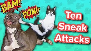 Download Ten Sneak Attacks // Funny Animal Compilation Video