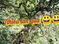 Download Đi tìm lan cùng những người bạn /các loại phong lan rừng/ Find orchids on mountains in Vietnam Video