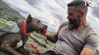 Download Recovering Addict And His Dog Rescued Each Other | The Dodo Video