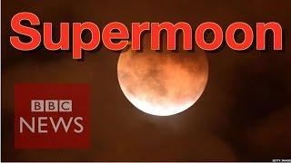 Download 'Supermoon' around the world - BBC News Video