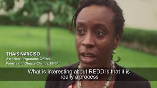Download Episode 5: Côte d'Ivoire (REDD+ and the future of African Forests) Video