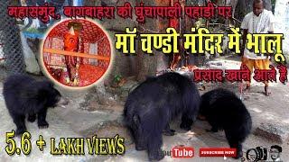 Download bear in bagbahara chhattisgarh| बागबाहरा में भालू माढ़ा Video