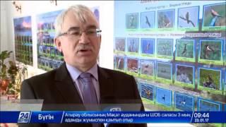 Download В Семее открылась выставка «Природа Чингизтау» Video