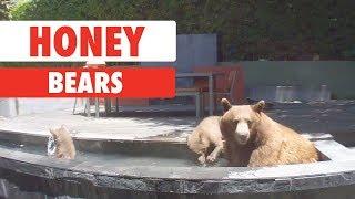 Download Honey Bears Video