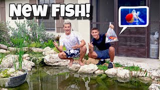 Download SURPRISING Paul With MASSIVE Goldfish!! Video