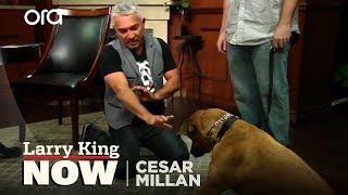 Download Cesar Millan on How He Became the 'Dog Whisperer' + Tips & Tricks Video