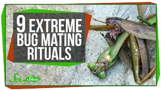 Download 9 Extreme Bug Mating Rituals Video