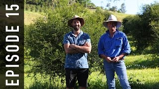 Download EP 15. Finger Lime Caviar | Andy & Ben Eat Australia Video