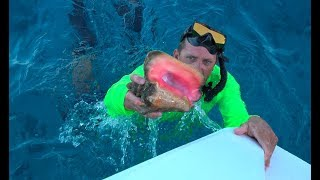 Download Queen Conch in The Exuma Cays, Staniel Cay {Catch Clean Cook} Video
