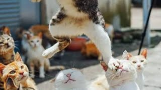Download You are NOT GOING TO BELIVE your OWN EYES - FUNNY animal compilation Video