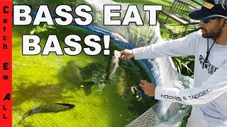 Download BASS EAT BASS in my Pool Aquarium! FISHING CHANGES in SEWER! Video