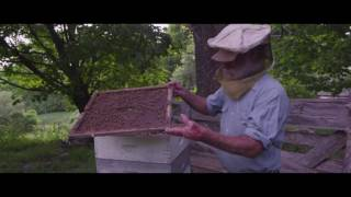 Download PETER AND THE FARM - ON BEEKEEPING (EXTRA SCENE) Video