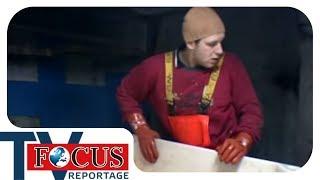 Download Knochenjob Hochseefischer - Focus TV Reportage Video