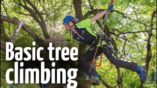 Download Simple & safe tree climbing ascent technique Video