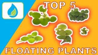 Download TOP 5 FLOATING AQUARIUM PLANTS Video