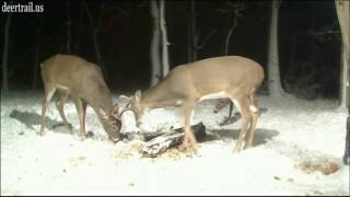 Download Battling Bucks (11-22-16) Video