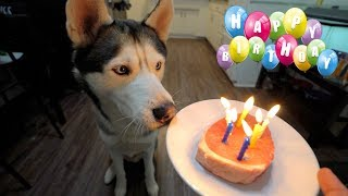 Download GOHAN'S 6TH BIRTHDAY!! Video