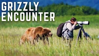 Download Close Encounter With A Wild Grizzly Bear Video