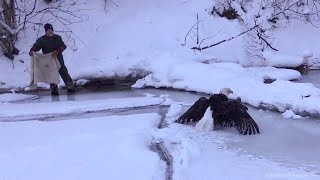 Download Iced Eagle Rescue on Lake Michigan Video