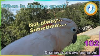 Download 102 When change is a good thing for your parrot. Video