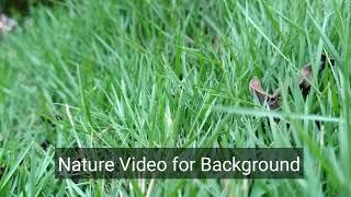 Download Garden green grass video for background HD Video