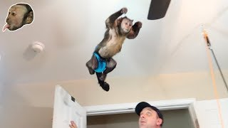 Download Monkey JUMPS FROM WALL? (Playroom Fun) Video