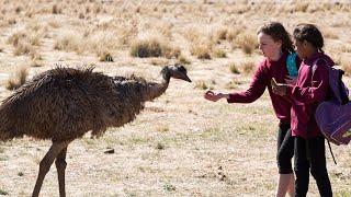 Download Emu Runner - Trailer - SFF 19 Video