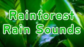 Download Rainforest Rain Sounds for Relaxation | Sleep or Study | 10 Hours White Noise Video