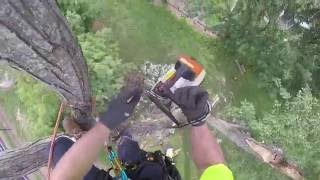 Download My first in-tree removal Video