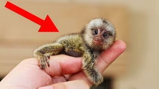 Download SMALLEST Animals In The World! Video