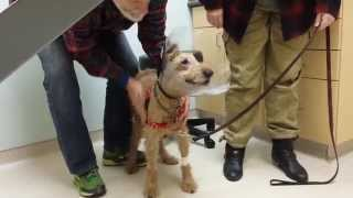 Download Formerly blind dog Duffy seeing the family after surgery Video