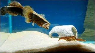 Download FEEDING my ALIEN fish LIVE CAUGHT CRAWFISH! Video
