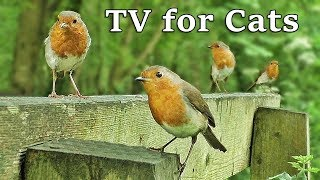 Download TV for Dogs : Birds in Slow Motion World - TV for Your Dog Video