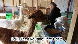 Download Daily Animal Feed Routine Part 1 Video