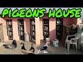 Download pigeons house || Kabootar fancy lakha siraji choti Video