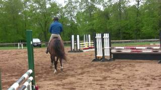 Download Young horse show jumping training Video