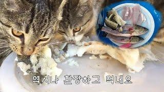 Download 고양이의 배스 샤브샤브 먹방 Video