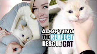 Download ADOPTING THE PERFECT RESCUE CAT!   From Cat Hoarder to Happy Home! Video