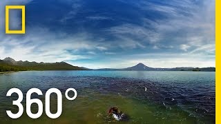 Download Swimming With Bears in 360° | National Geographic Video