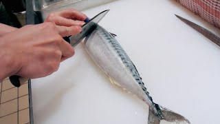 Download GRAPHIC - How to fillet a fish - Mackerel - Japanese technique - サバのさばき方 Video