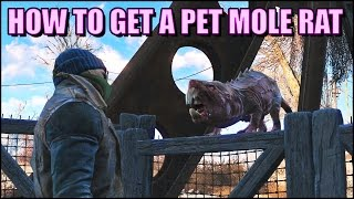 Download How to Get Your Very Own Pet Mole Rat in Fallout 4 Video