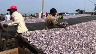 Download Un projet à succès de la FAO au Burundi: ''Appui à la technologie post-capture de poisson'' Video
