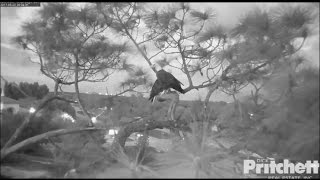 Download SWFL Eagles ~ The Lovebirds Are Home For The Evening 5.22.17 Video