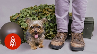 Download The Tiny Dog Who Became a World War II Hero Video