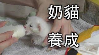 Download 【Whale】撿來小奶貓的日常養成 Video