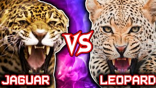 Download Jaguar vs Leopard | ANIMAL BATTLE (+Lion vs Tiger winner) Video