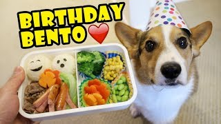 Download Surprise BENTO Box for CORGI Dog's Birthday || Life After College: Ep. 582 Video