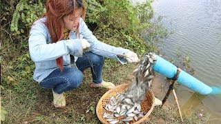 Download Believe This Fishing? Unique Fish Trapping System | New Technique Of Catching Village Fish Video