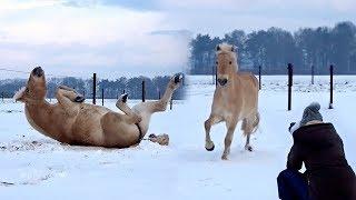 Download Dikke pret in de sneeuw! | Vlog #80 Video
